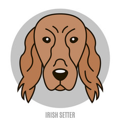 Portrait of irish setter vector