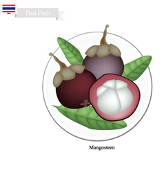 Purple Mangosteens A Famous Fruit in Thailand vector image