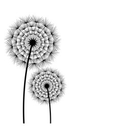 beautiful spring and summer flower dandelion vector image