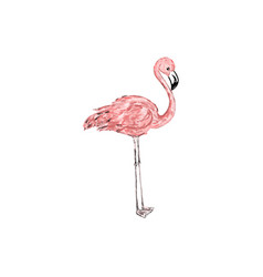 abstract trendy pink flamingo vector image