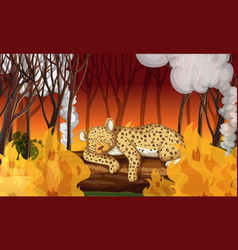 deforestation scene with cheetah dying in wildfire vector image