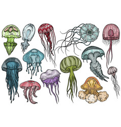Jellyfish set sea collection vector