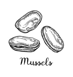 Mussels ink sketch vector