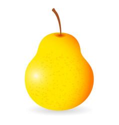 Pear isolated vector