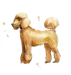 Poodle in profile watercolor vector