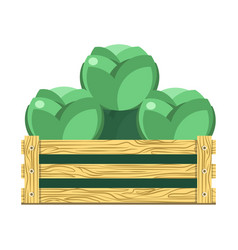 Green leafy cabbage in wooden box isolated vector