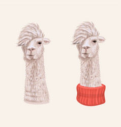 Alpaca hand drawn character vector
