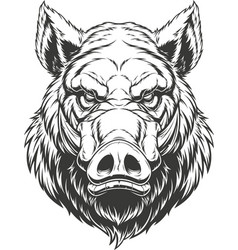 Head ferocious boar vector