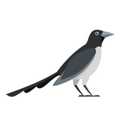 Looking magpie icon flat style vector