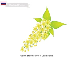 National Flower of Thailand Golden Shower Flower vector image