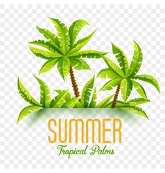 Summer coconut palms vector