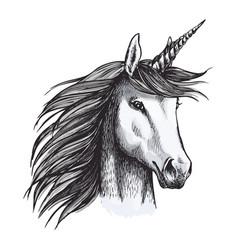Unicorn mystic magic horse animal sketch vector