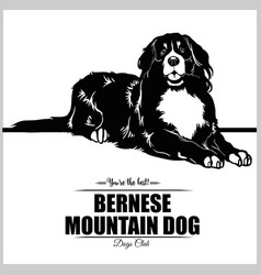 bernese mountain dog - for t vector image
