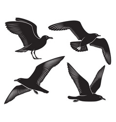 bird seagull vector image