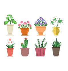 dieffenbachia flowers in pot vector image