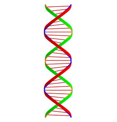 dna twin spiral vector image