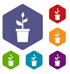Plant in clay pot icons set vector