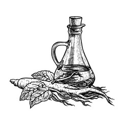 hand drawn ginseng oil extract of plant with vector image