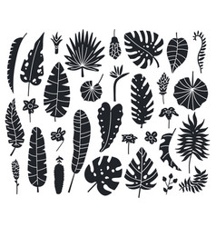 jungle leaves silhouettes exotic palm banana and vector image