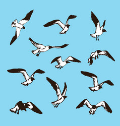 birds sketch drawing of seagulls vector image