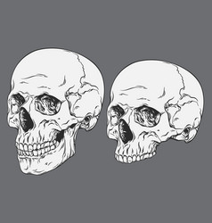 line art anatomically correct human skulls set vector image