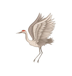 Red-crowned crane in flying action wild wading vector