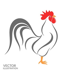 Rooster Isolated bird on white background vector