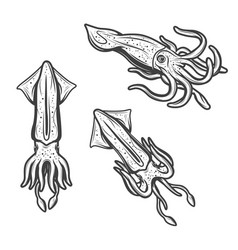 Squids seafood and fishing monochrome icons vector