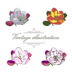 Vintage collection of flower apple vector