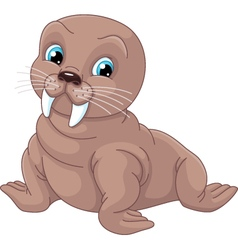 Young Walrus vector image