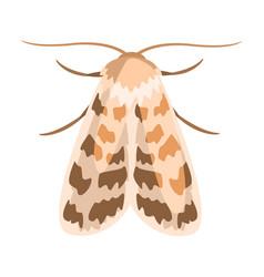 ash sphinx moth or manduca jasminearum colorful vector image