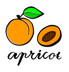 A ripe apricot and fruit in cut flat vector