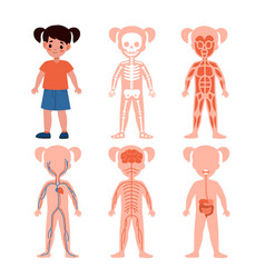 girl body system kids silhouettes with vital vector image