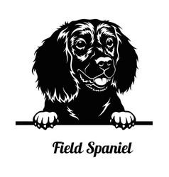 Peeking dog - field spaniel breed - head isolated vector
