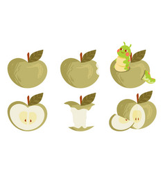 Set green ripe apple collections whole vector