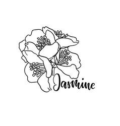 black and white branch flower jasmine outline vector image