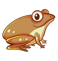 Brown frog on white background vector