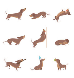 funny playful purebred brown dachshund dog vector image