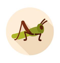 Grasshopper locust icon vector
