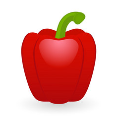 red pepper isolated vector image