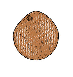 Delicious coconut fruit to eat vector