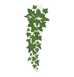 Ivy branch icon greenery home decoration and vector