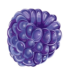 blueberry fresh vector image vector image