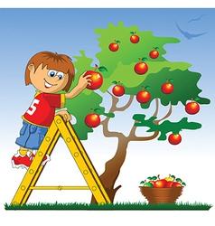 Boy picking apples vector image