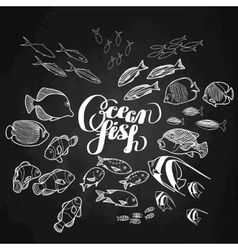 collection ocean fish vector image