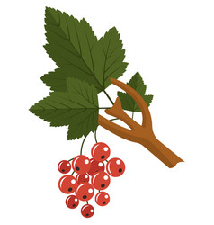 Red currant berry on stem with leaves flat vector