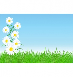 chamomiles with green grass vector image vector image