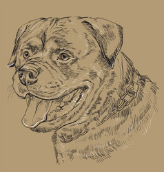 Monochrome rottweiler hand drawing portrait vector