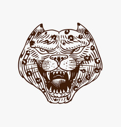 screaming mad leopard or panther for tattoo vector image