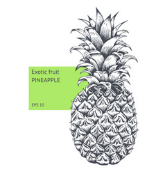 pineapple fruit hand drawn sketch vector image